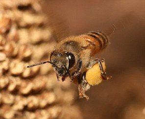 十大蜇人最疼昆虫:子弹蚁叮咬似火灼烧(图)