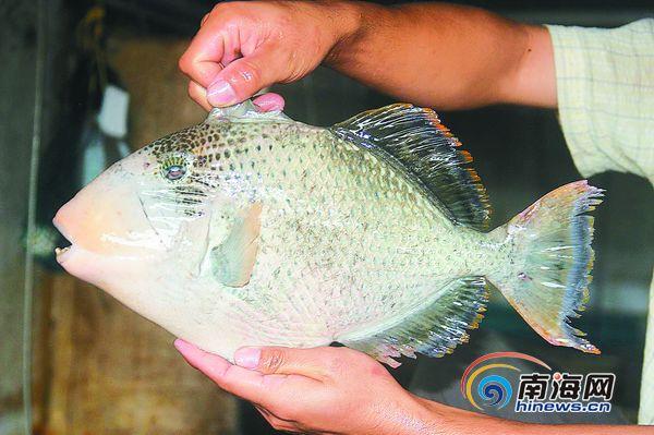 南沙群岛鱼类图片大全