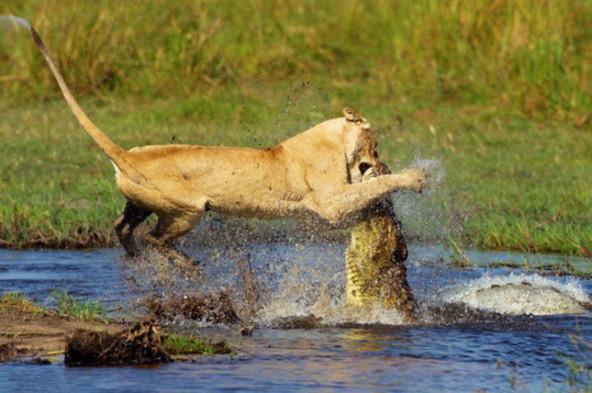 野生动物保护幼仔感人瞬间