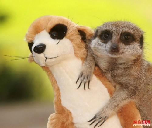 动物卖萌搞笑瞬间 谁比谁可爱[组图]