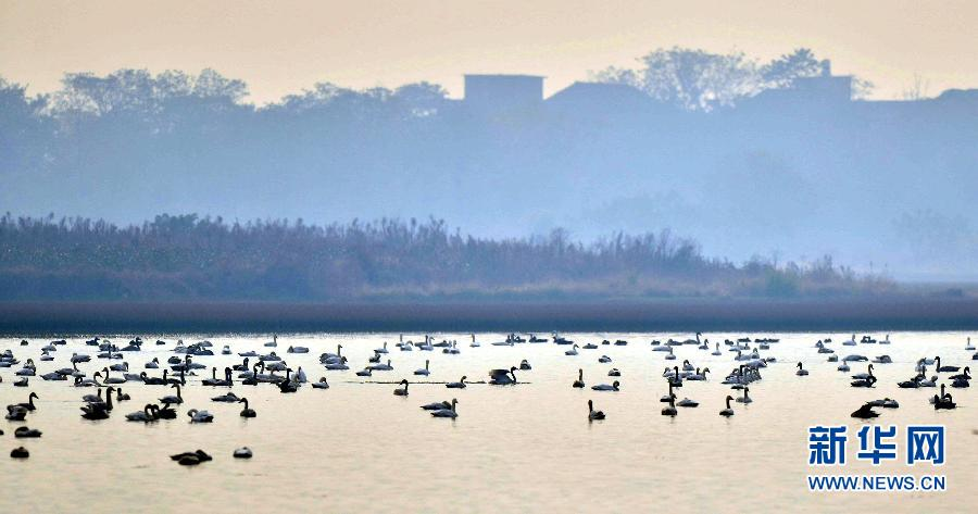 广西天鹅县城风景图片