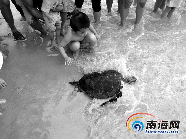 3岁绿海龟在游客小朋友的陪伴下重归大海