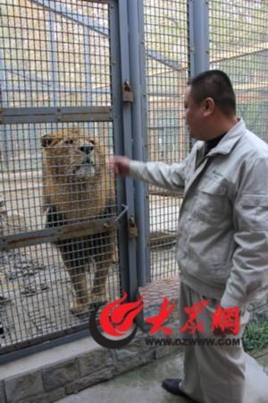 社会新闻 法治聚焦    走进济南动物园,不能错过的园区当属狮虎园.