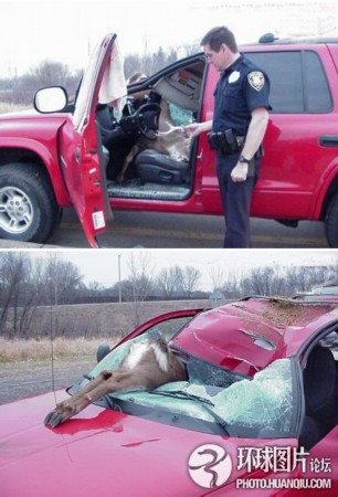 诡异车祸现场惊爆眼球; 奥迪吊至楼顶让人匪夷所思 诡异车祸现场惊爆