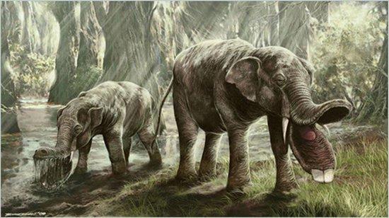 非洲象鼻族科学解释