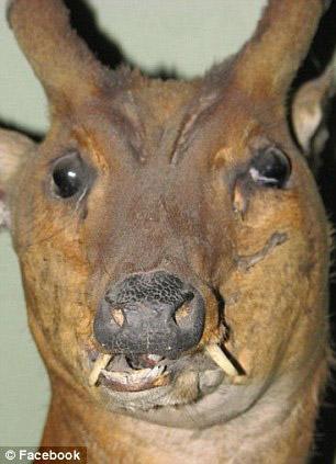 盘点被糟蹋的动物标本:珍稀物种遭遇不幸/图
