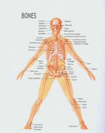 女人人身体结构示意图