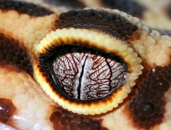 """动物界的火眼金睛:大鳄鱼""""四只眼""""闪闪发光/图"""