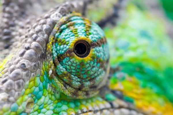 冷血动物眼睛微距照片:深邃而美丽(图)