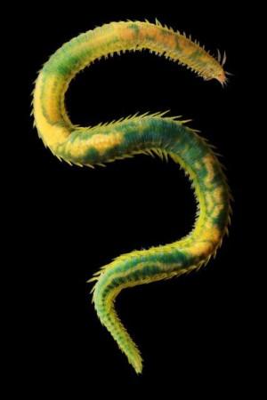 动物 蛇 300_450 竖版 竖屏