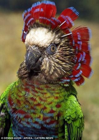 抓拍全球大自然中颜色最鲜艳动物【高清组图】