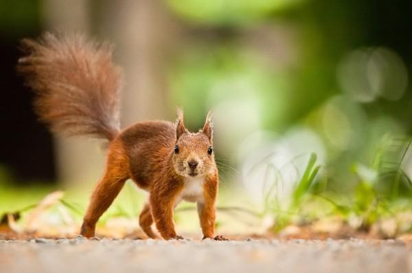 自然界最萌最讨喜的小动物近景系列照(高清组图)