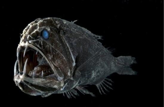 深海魔鲸王