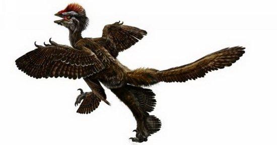 它是一种小型长有羽毛的恐龙,在它们的腿部拥有第二组翅膀