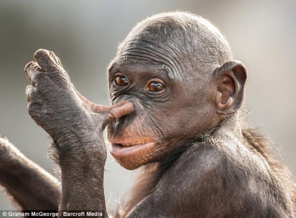 动物 搞笑/格雷厄姆之前生活在英国,现居佛罗里达州。
