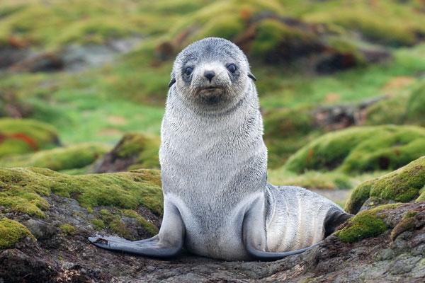 萌动你心:那些会摆pose的动物明星们(图)