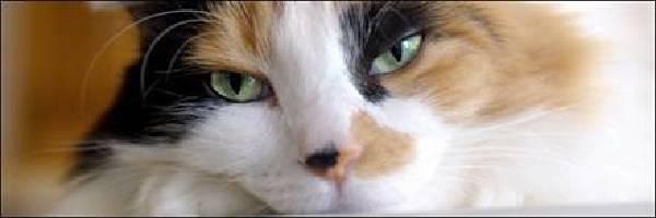 因此猫保留自己短期记忆的能力就不断的增强
