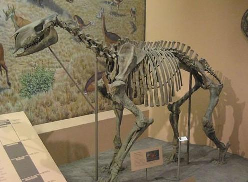 13种名气超恐龙远古奇异动物 /组图