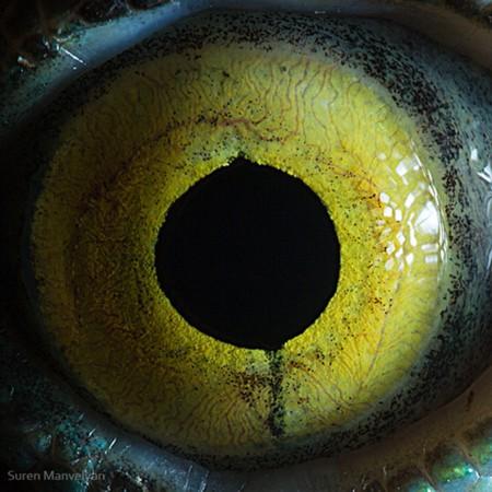 神奇的动物瞳孔摄影:眼睛里的奇趣景象(图)