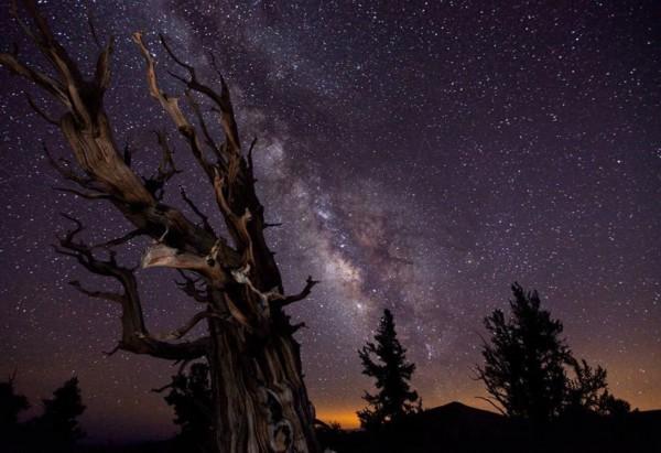 """""""远古枯树与银河系"""":乳白色的星光(高清组图)"""