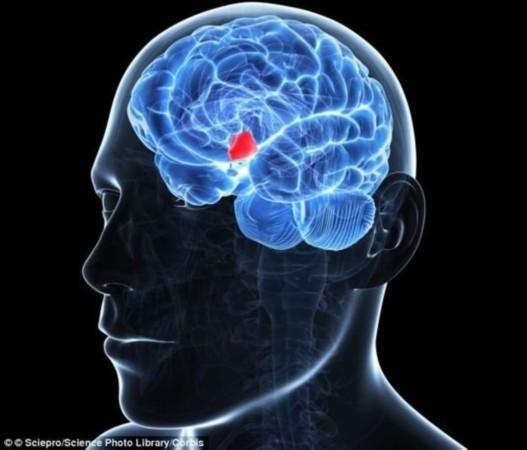 科学家发现下丘脑掌控人体青春永驻的秘密(图)