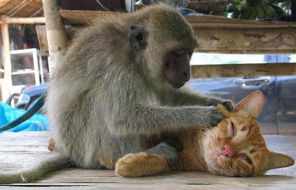 可爱动物逗趣 温暖治愈人心(组图)