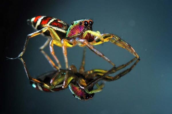 叹为观止!令人惊艳的动物微距摄影作品(组图)