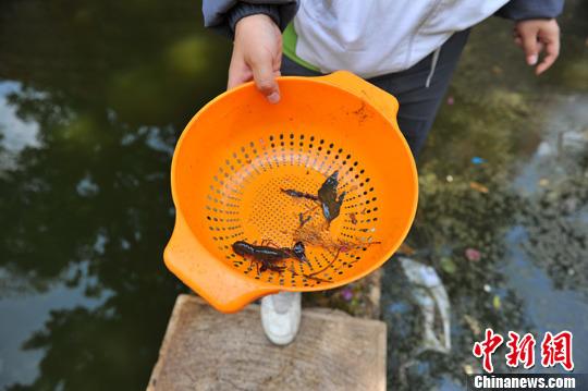 昆明滇池流域小数学泛滥v流域水组图a流域(龙虾)小学老师生态体会图片