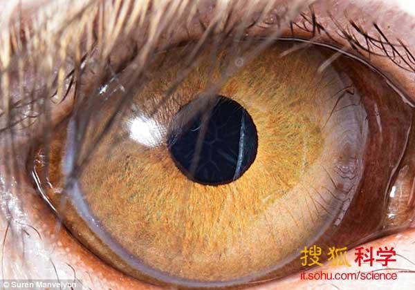 奇妙微距照片呈现不同动物眼睛复杂结构(组图)