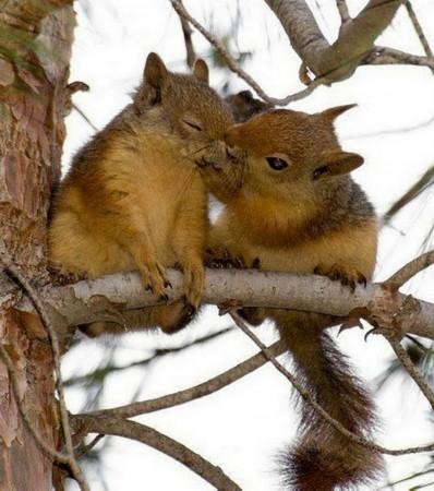 """动物情侣""""接吻照""""秀恩爱:温暖治愈人心(组图)"""