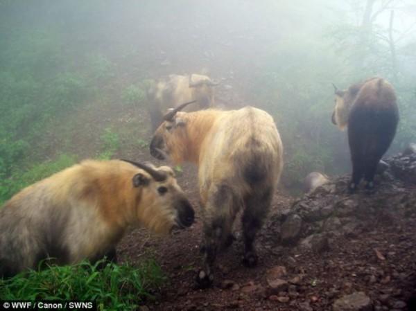 世界自然基金会公布珍稀动物照片【组图】__海南新闻