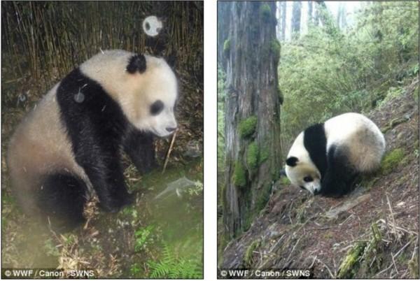 世界自然基金会公布珍稀动物照片【组图】