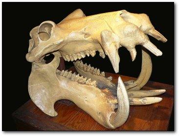 盘点全球8种奇异动物化石:海豹头骨像恐龙/图