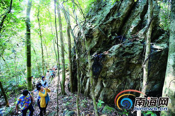 """万宁热带雨林发现3亿年前""""木化石"""" 海南罕见"""