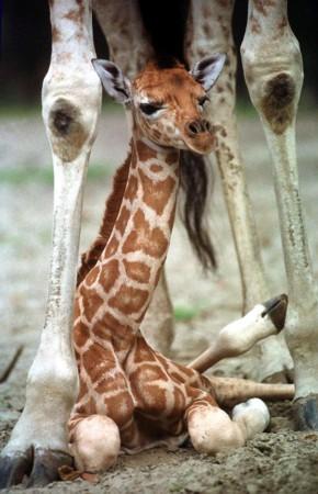动物王国幼稚园:萌到爆的可爱动物宝宝(图)