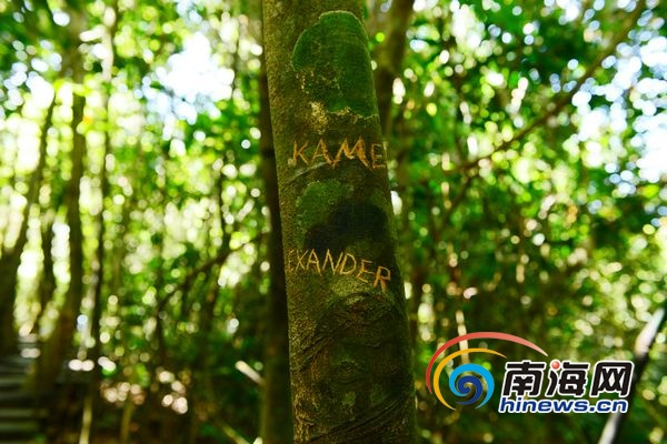 直击三亚景区不文明行为:亚龙湾多树木被刻字[图]