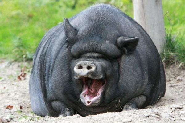盘点动物欢笑有趣瞬间:大猩猩牙齿全露(组图)