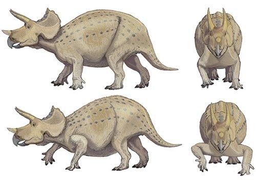 简易恐龙画法步骤