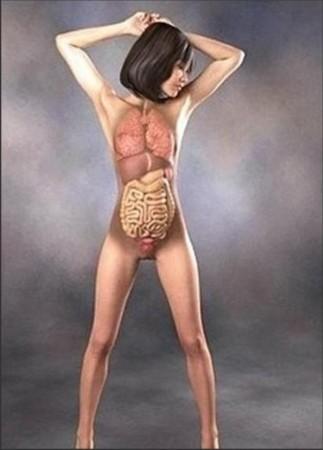 超级惊艳 日本3D美女医学人体解剖图(组图)_