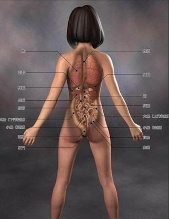 超级惊艳 日本3D美女医学人体解剖图(组图)-