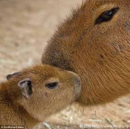 盘点那些濒危动物的可爱幼崽们