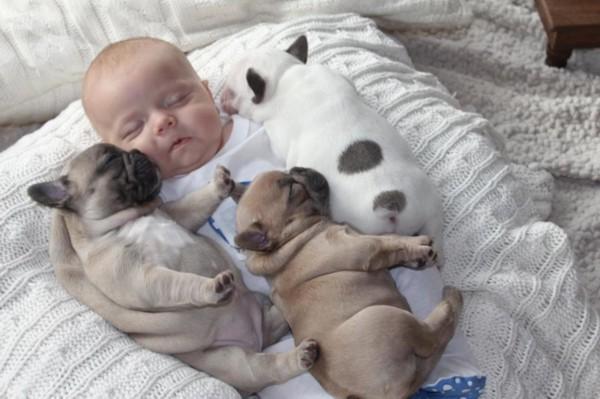 """盘点小婴儿和他的斗牛犬""""朋友"""" 超萌的画面[组图]"""