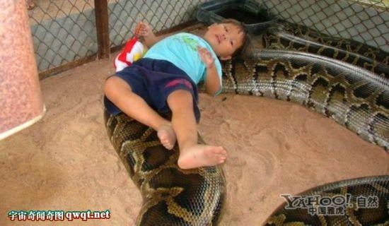 盘点捕获世界上最大的蛇图集 巨蟒令人惊愕