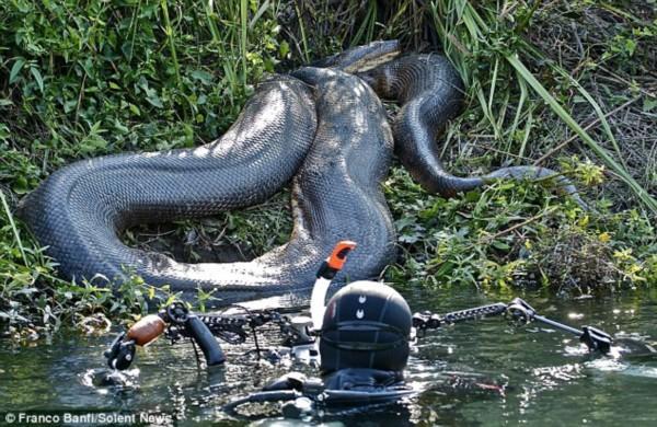 惊爆近距离接触6条8米巨型水蟒