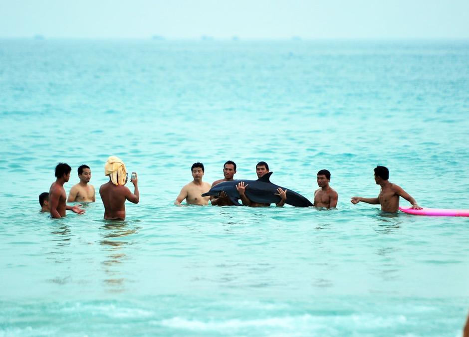 海豚搁浅无知市民游客纷纷合影
