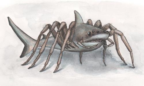 蜘蛛鲨   这是令人恐惧的蜘蛛和鲨鱼的杂交体生物.