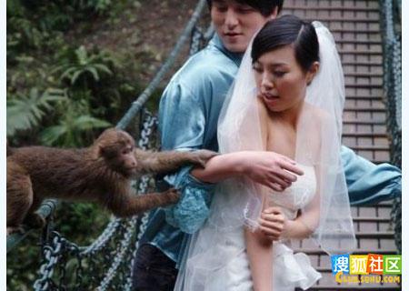 动物也好色 美女遭猴子非礼扒衣服 高清图片