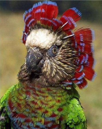 盘点自然界中多彩的动物:色彩绚丽(组图)