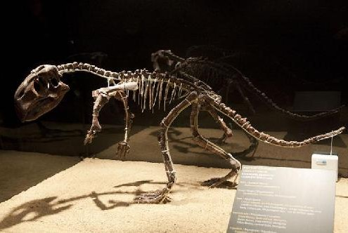 髋骨解剖结构图