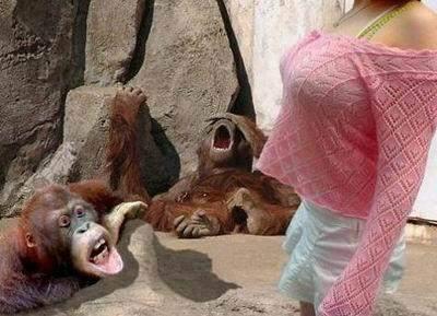 美女遭猩猩袭胸!盘点令美女抓狂的好色动物图